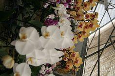 Fort Bragg, California Flower