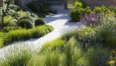 Sculptured plants contrasting with soft garden beds Dry Garden, Garden Pool, Garden Paths, Garden Beds, Contemporary Garden Design, Landscape Design, Formal Gardens, Outdoor Gardens, Garden Structures