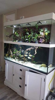 Control Over Your Aquarium! - Life ideas - Control Over Your Aquarium! – Life ideas Control Over Your Aquarium!