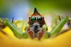 From arachnids to insects, journey into the world of macro photography and see the wonder of these creatures in ultra close-up detail. Bbc, Macro Photography, Amazing Photography, Photography Ideas, Spider Face, Foto Macro, Jumping Spider, Garden Animals, Nature Pictures