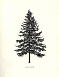 These tree illustrations are bushying forth with awesomeness.