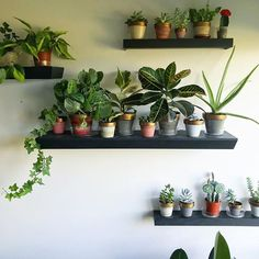9 best plants on shelves images indoor plants plant decor gardens rh pinterest com