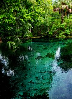 Irridescence, Silver Springs, Florida