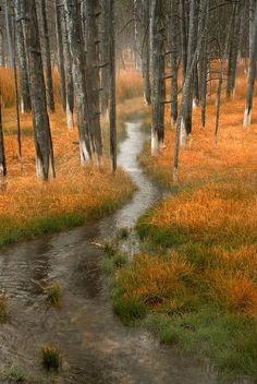 Bobby Socks Trees - Wyoming
