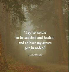 I go to nature to be soothed and healed, and to have my senses put in order ~ john burroughs nature quotes A True Sense of Order Great Quotes, Quotes To Live By, Inspirational Quotes, Peace Quotes, Soul Quotes, Awesome Quotes, Citation Nature, Nature Quotes, Quotes About Nature