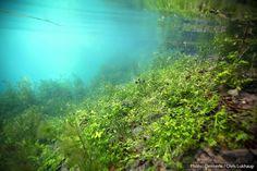Biotope Aquarium, Aquarium Fish, Aquarium Backgrounds, Beneath The Surface, Underwater World, Fresh Water, Aquascaping, Carp, Mermaids