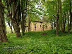 Park dworski na wiosnę Trunks, Park, Plants, Historia, Drift Wood, Tree Trunks, Parks, Plant, Planets