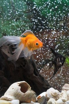 Feng Shui Aquariums — Guidelines for Wealth