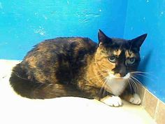 Brooklyn NY.  Naomi.  Spayed 8 yr old female.  Dies in a.m.  See Pets on Death Row- Urgent Death on fb.***RESCUED***