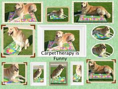 http://www.49lley.com/c/carpet-therapy/?view_style=grid&view_count=18&view_sort=age … #carpetTherapy #pets #dogs #cats #horses #horsesoftwitter
