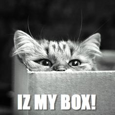 Any photo of a cat in a box works for me! Especially a nice black and white arty one.