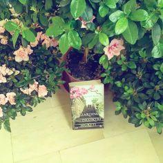 """Giorno 15 della #ireadchallengemay di @leggendoabari Libro  piante...e ci è venuto subito in mente """"Il giardino degli incontri segreti"""" di Lucinda Riley  #libri #leggere #book #bookstagram #instalibro #piante #fiori #flowers #greenthumb #lucindariley #nature #instabook #bookporn #booklover #bookworms #bookish #instalike #like #bookandnature #books #bookblog #libridaleggere #passionelettura #picoftheday #lettura #librichepassione #bibliophile"""