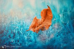 Magic of Fall: 30+ photo fairy-tales by Alex Greenshpun