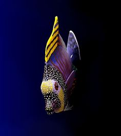 Summary: To start Tropical fish stores can be an exciting prospect. Many tropical and salt water fish lover's dream about how to make it big in this exciting Tropical fish stores business. Pretty Fish, Cool Fish, Beautiful Fish, Underwater Creatures, Underwater Life, Ocean Creatures, Beautiful Sea Creatures, Animals Beautiful, Colorful Fish