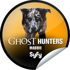 Ghost Hunters: Maddie, Ghost Hunting Dog