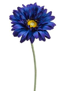 Blue Gerbera Daisy | Blue Wedding | Afloral.com