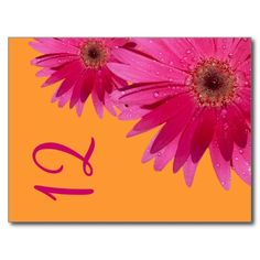 Orange and Pink Gerbera Daisy Table Number Card Postcards