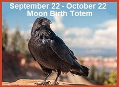 See the European RAVEN bird looks like Crow in India Animal Spirit Guides, Spirit Animal, Learn Finnish, Finnish Words, Finnish Language, Raven Bird, Power Animal, Language Study, Royalty Free Images