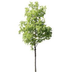 """Résultat de recherche d'images pour """"arbre"""""""