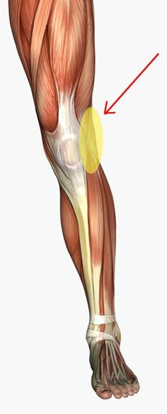 A groin strain is an injury to the groin area the area of the body where the abdomen meets the for Exterior knee pain