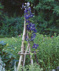 Build a Rustic Tuteur- detailed instructions @fine gardening