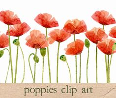 Cheap art pictures to draw, Buy Quality art scraper directly from China art applique wall decals Suppliers: Original Watercolor Painting Poppies, Flower Clipart Artwork home wall decor wall art contemporary modern love fine art Art Clipart, Flower Clipart, Watercolor Poppies, Red Poppies, Watercolor Paintings, Art Floral, Poppy Images, Poppies Tattoo, Clip Art