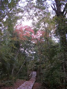 Boardwalk thru the woods at Reflections on the Water