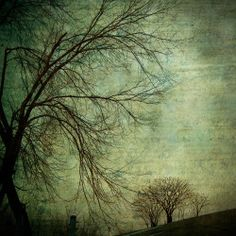 (via surreal photo trees landscape green by sandraarduiniphoto on Etsy)