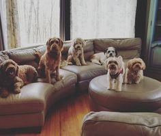 #couchtime #springbreak #dogsofinstagram #thedoggiechalet