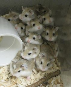 19 Reasons Why Hamsters Should Be Your Role Model