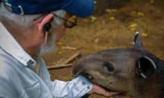 Nicaragua is fighting to save its endangered tapirs