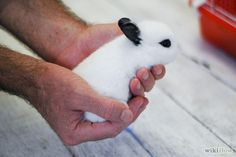 5 Ways to safely properly and gently hold a Rabbit - Note if the rabbit struggles, gently put it down with great care to support it's back as they are very fragile, bunny rabbit handling