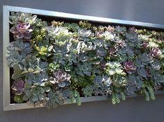 Arte con plantas suculentas   Cuidar de tus plantas es facilisimo.com