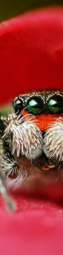 macro of a spider!
