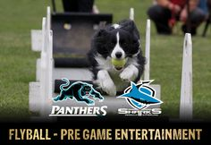 Penrith Panthers NRL http://www.penrithpanthers.com.au/news/2016/07/05/gameday_info_panther.html