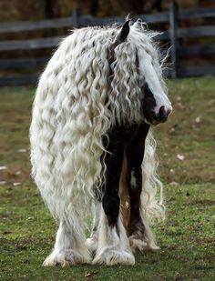 חיות עם רעמת שיער מרהיבה: סוס עם שיער גלי וארוך