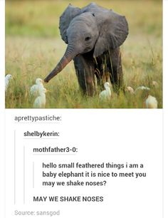 Img it's a ellephant. I love ellephants – No One - Baby Animals Cute Funny Animals, Cute Baby Animals, Funny Cute, Animals And Pets, Hilarious, Animal Pictures, Funny Pictures, Alpacas, Cute Creatures