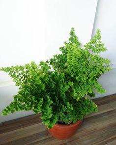Bakal Tumbuhan Suplir : bakal, tumbuhan, suplir, Plantdecor, Ideas, Plant, Decor,, Plants,, Goals