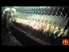 Animal Cruelty In McDonalds Slaughterhouses
