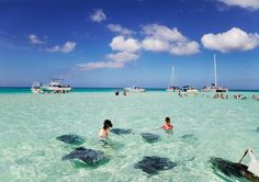 Best Rated Shore Excursions & Cruise Excursions in Grand Cayman, Cayman Islands