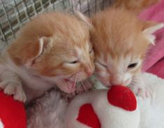 Chili and Billi two little cats 🐈 love playing together Newborn Kittens, Baby Cats, Cats And Kittens, Cat Lovers, Chili, Animals, Beautiful, Animales, Small Kittens
