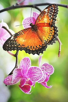 Butterfly | Flickr - Photo Sharing!