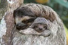 awe sloths