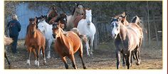 Horse sense zoo and training faciilty located 5 minutes north of St. Lets Do It, Zoo Animals, Training, Horses, Pets, Places, Work Outs, Excercise, Onderwijs