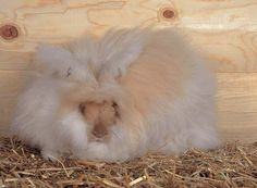 How to raise Angora rabbits for their wool, plus tips on selling and marketing your wool.