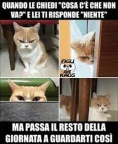 Ideas for memes funny espanol chistes humor Memes Humor, Frases Humor, New Memes, Funny Cat Memes, Funny Cartoons, Funny Comics, Tumblr Funny, Funny Humor, Hilarious Jokes