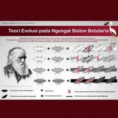 teori evolusi pada ngengat bistoon betularia putih Movie Posters, Art, Craft Art, Film Poster, Kunst, Gcse Art, Film Posters, Poster, Sanat