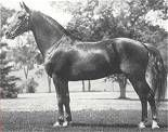 MENTOR 8627  Sire: 7991 GOLDFIELD Dam: 04960 FAIRYTOP  Sex: Stallion Color: Chestnut Foaled: 05-19-1942 Orig. Owner: William G Glenney Jr  Totals By Color: B: 5 Bl: 1 Br: 1 Ch: 77  Totals By Sex: Stallions: 20  Mares: 32  Geldings: 32 Total Progeny: 84  Chestnut; irregular star & broken strip; both hind pasterns white.  Foaled 5/19/1942, Middlebury, VT. Bred by USDA, VT.  943 crosses to Justin Morgan. Trotted, but preferred to pace.