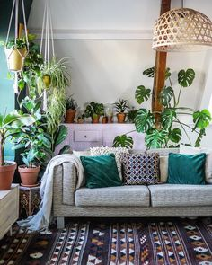 Living Room Interior Design Indoor Plants