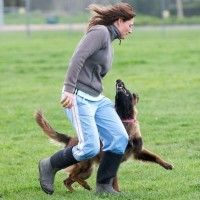 "The ""miracle method"" is a popular method for trialing in a variety of sports.  I've seen it frequently in agility, obedience, IPO, etc. -Denise Fenzi"